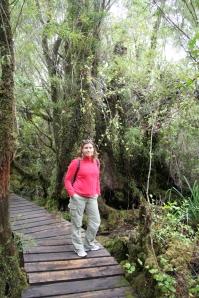 Foret aménagée de Petual - Parc national Chiloé - Chili