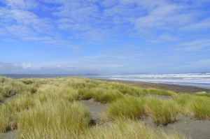 Plage de Cucao - Parc national Chiloe - Chili