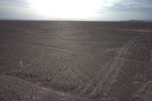 Un arbre - Nazca - Pérou