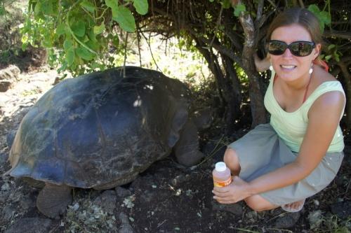 Une tortue centenaire - Les Galapagos - Equateur
