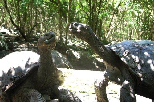 Petit affrontement - Floreana - Les Galapagos - Equateur