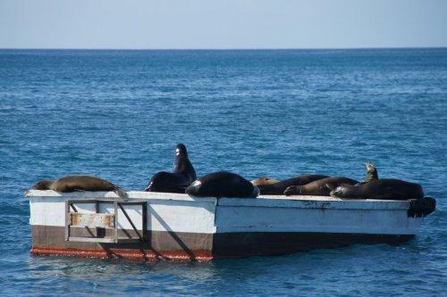 Squat du ponton, comme à Cerbère - Floreana - Les Galapagos - Equateur